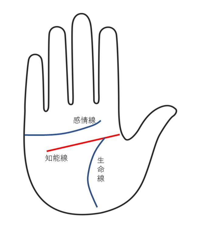 知能線(頭脳線)はこの赤い線です 西日本シティ銀行(Go!Go!ワンク)